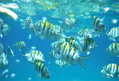 Padi Rescue Diver - Sosua, Dominican Republic