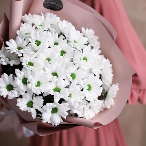 Монобукет из ромашковых хризантем 7 шт №1008 - Фото 8