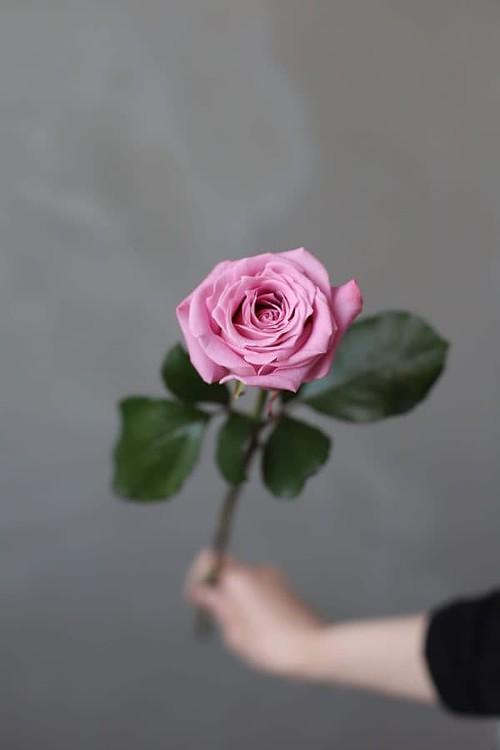 Роза Российская Маритим - Фото 1