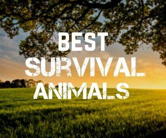 survival animals