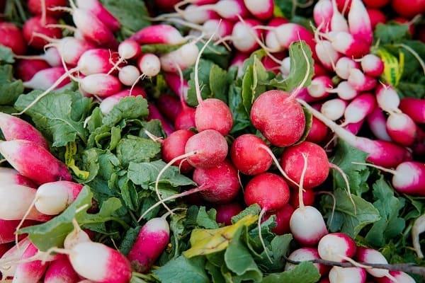grow radish