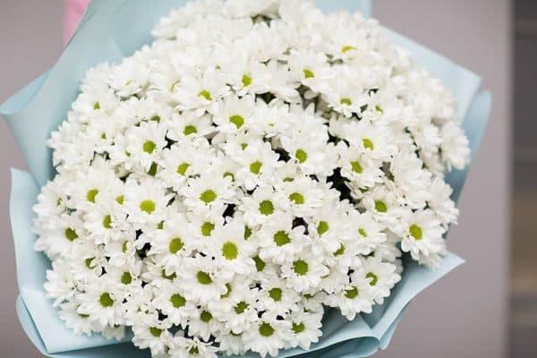 Букет из 25 ромашковых хризантем №617 - Фото 2