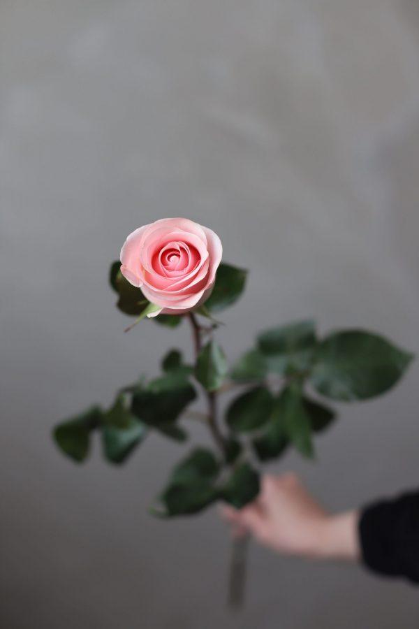 """Роза сорта """"Новиа"""" (Эквадор) - Фото 1"""