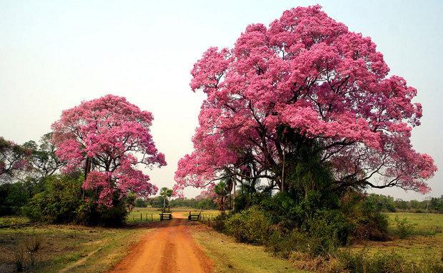 Pantanal Sul