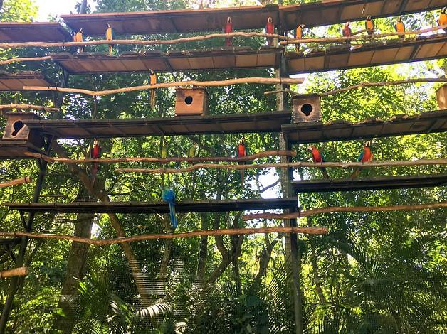 Bird Park Brazil
