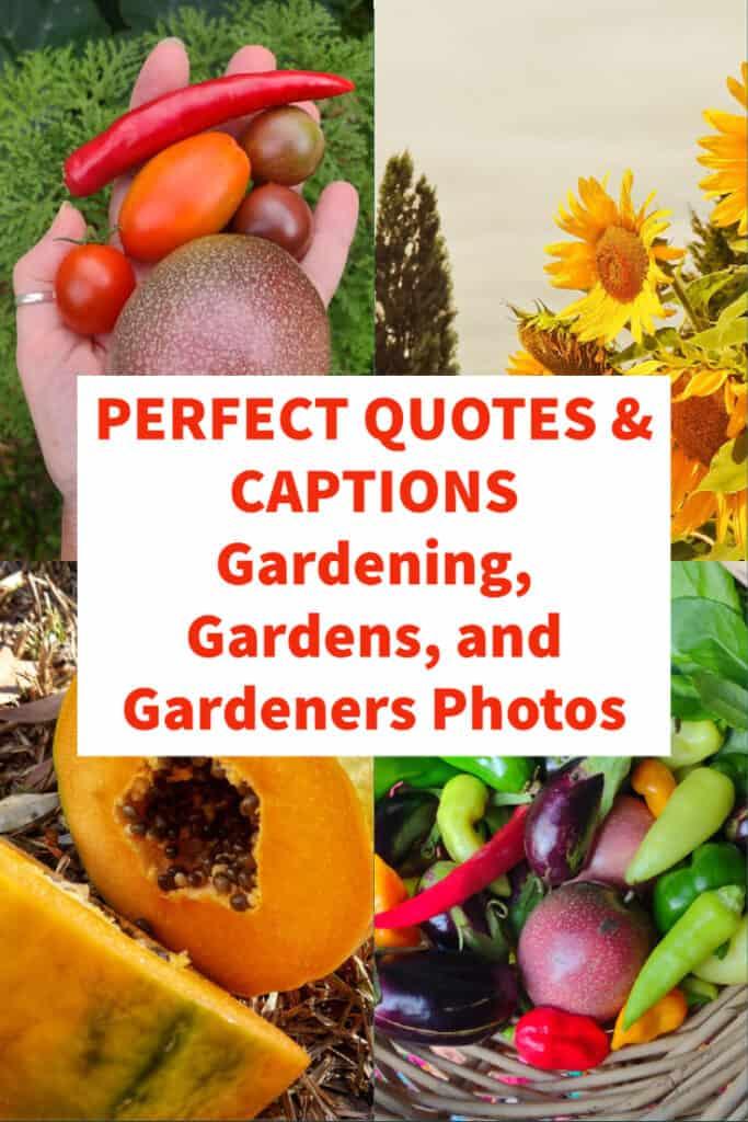 Quotes and Captions Gardening, Gardeners, Gardening Photos Pinterest