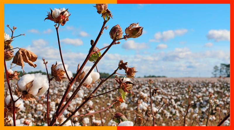 Motivos por los que tanto triunfan las camisetas de algodón orgánico