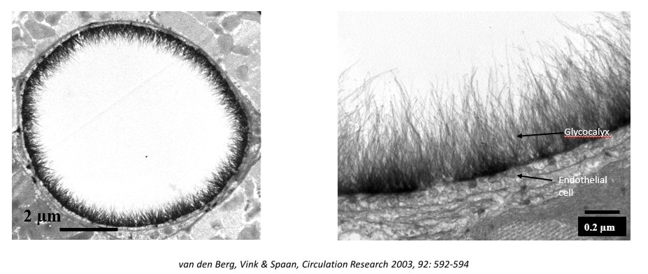 Microscopic image two angles