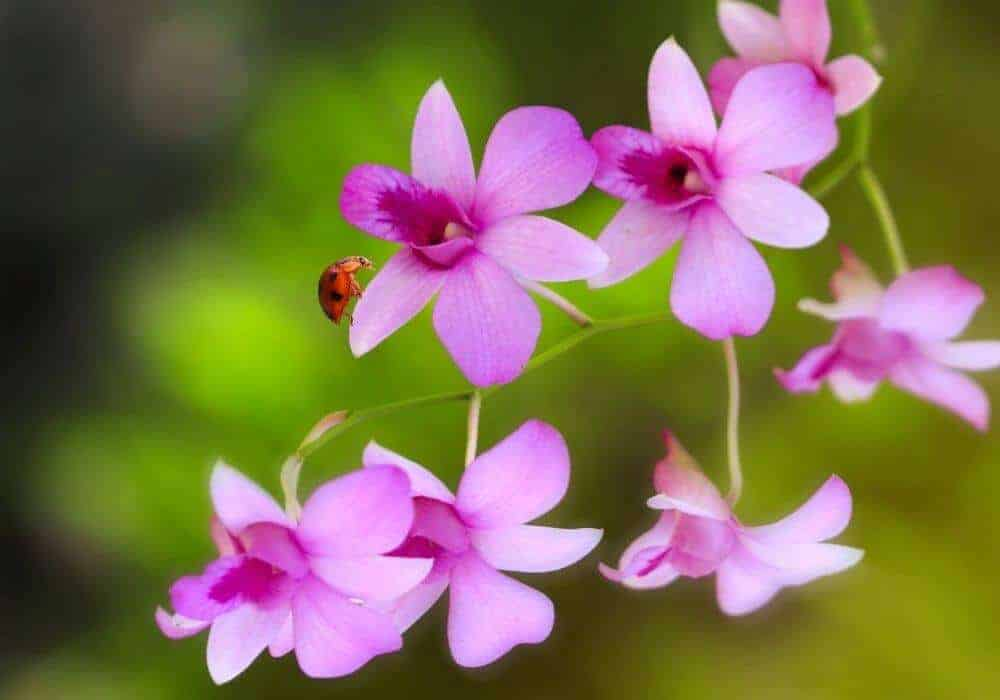 How To Get Rid Of Bugs On Orchids