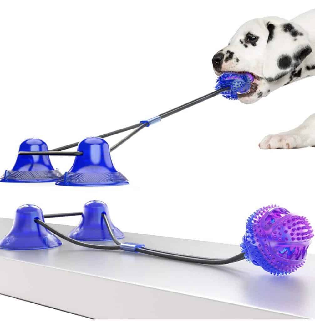 Dalmatian tugging on a toy.