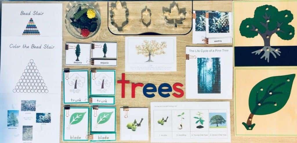 Montessori Tree Unit Study Materials
