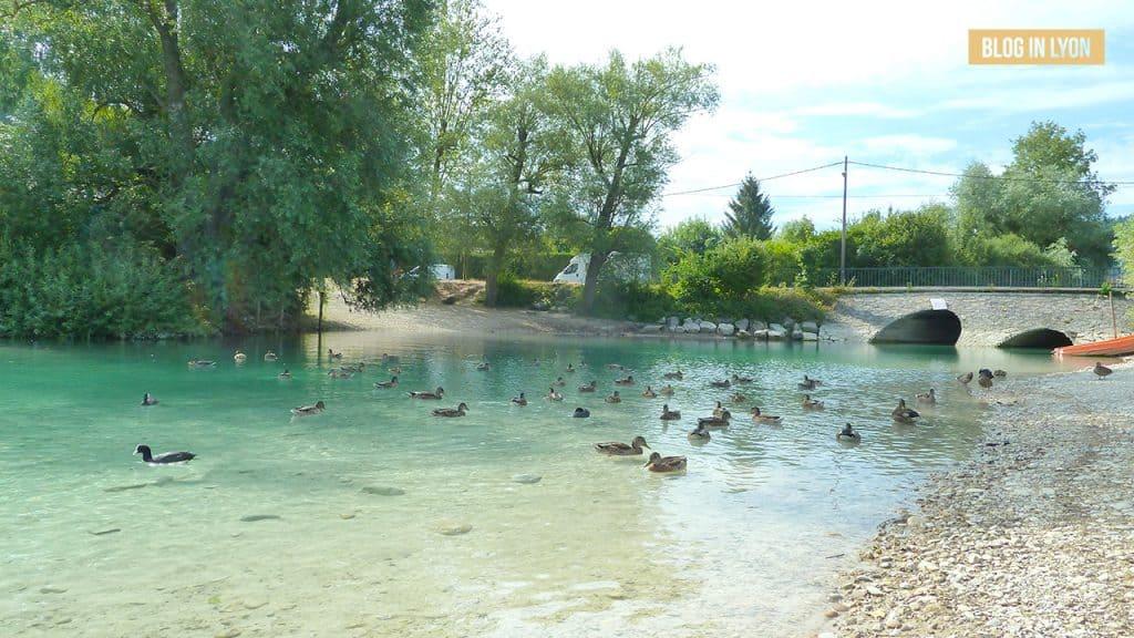 Lac de Paladru - Baignades autour de Lyon | Blog In Lyon