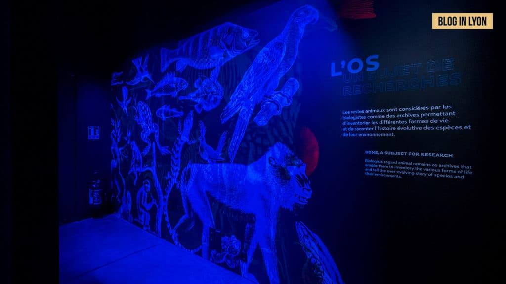 Exposition Traces du vivant - Musée des Confluences | Blog In Lyon