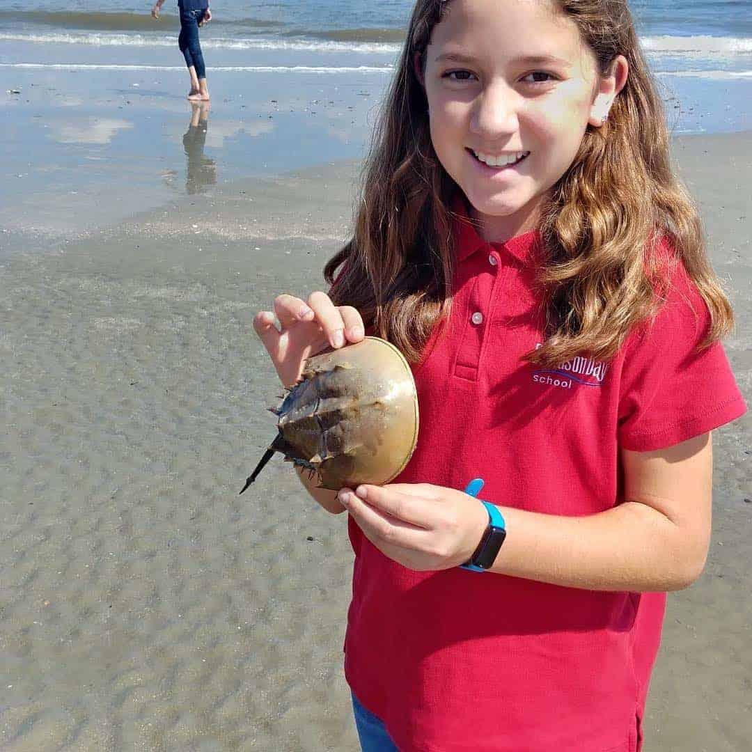 Child holding horseshoe crab. Nature boat tours Charleston