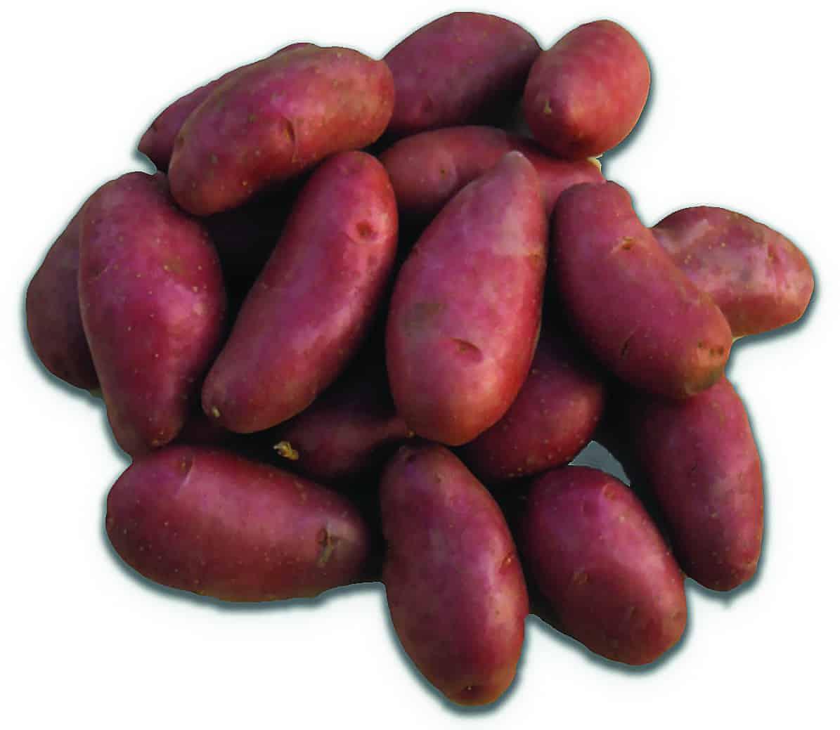 glucolis blue potato sugar testing