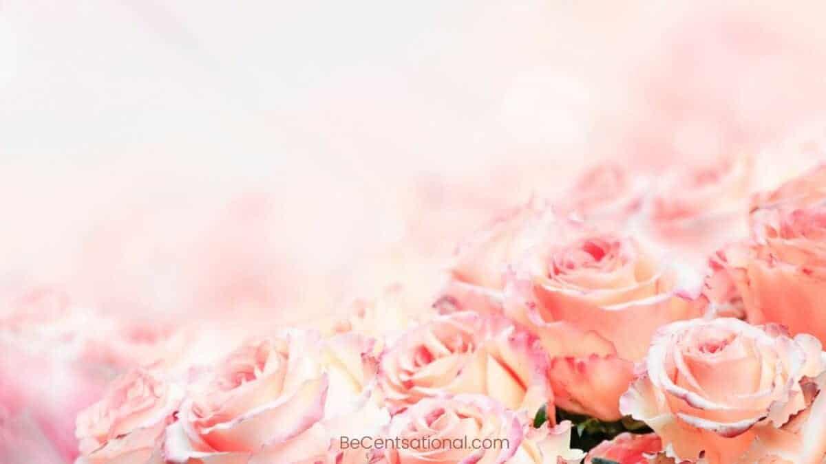 pink tip Flower Wallpapers Wallpapers, flower Backgrounds for desktop