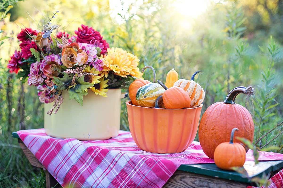 Photo of Pumpkins & Flowers on Picnic Blanket