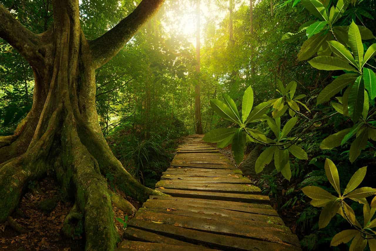 Random Jungle Encounters