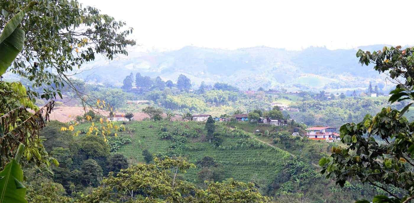 Coffee farm panorama