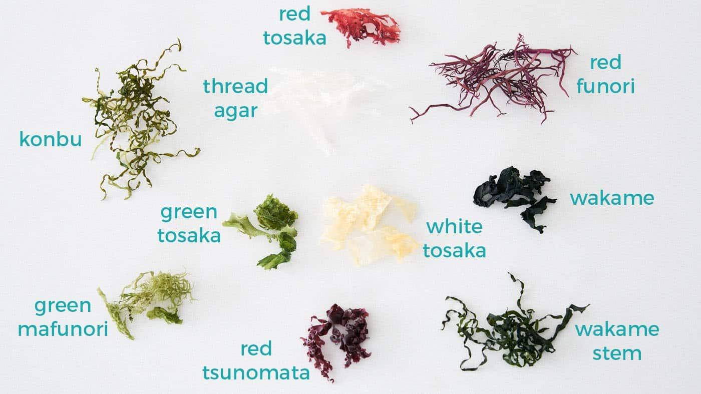 Different varieties of edible seaweed for making seaweed salad including konbu, wakame, agar, funori, and tosaka.