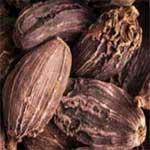 Cardamom-black-बड़ी-इलाइची-Badi-ilaychi-Spices-Names-in-English-Hindi-Meri-Rasoi