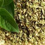 Carom-Oregano-अजवायन-मिर्जनजोश-Ajwain-ke-Patte-Spices-Names-in-English-Hindi-Meri-Rasoi