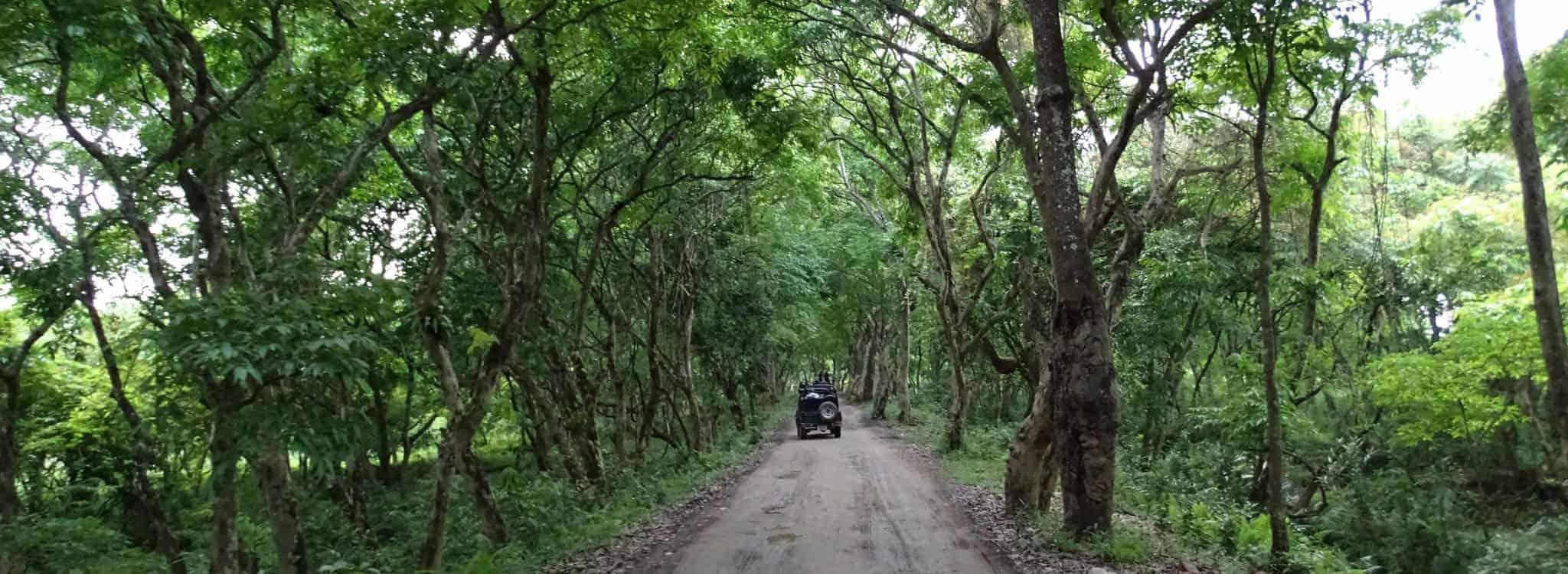 Wildlife trip to the Kaziranga National Park