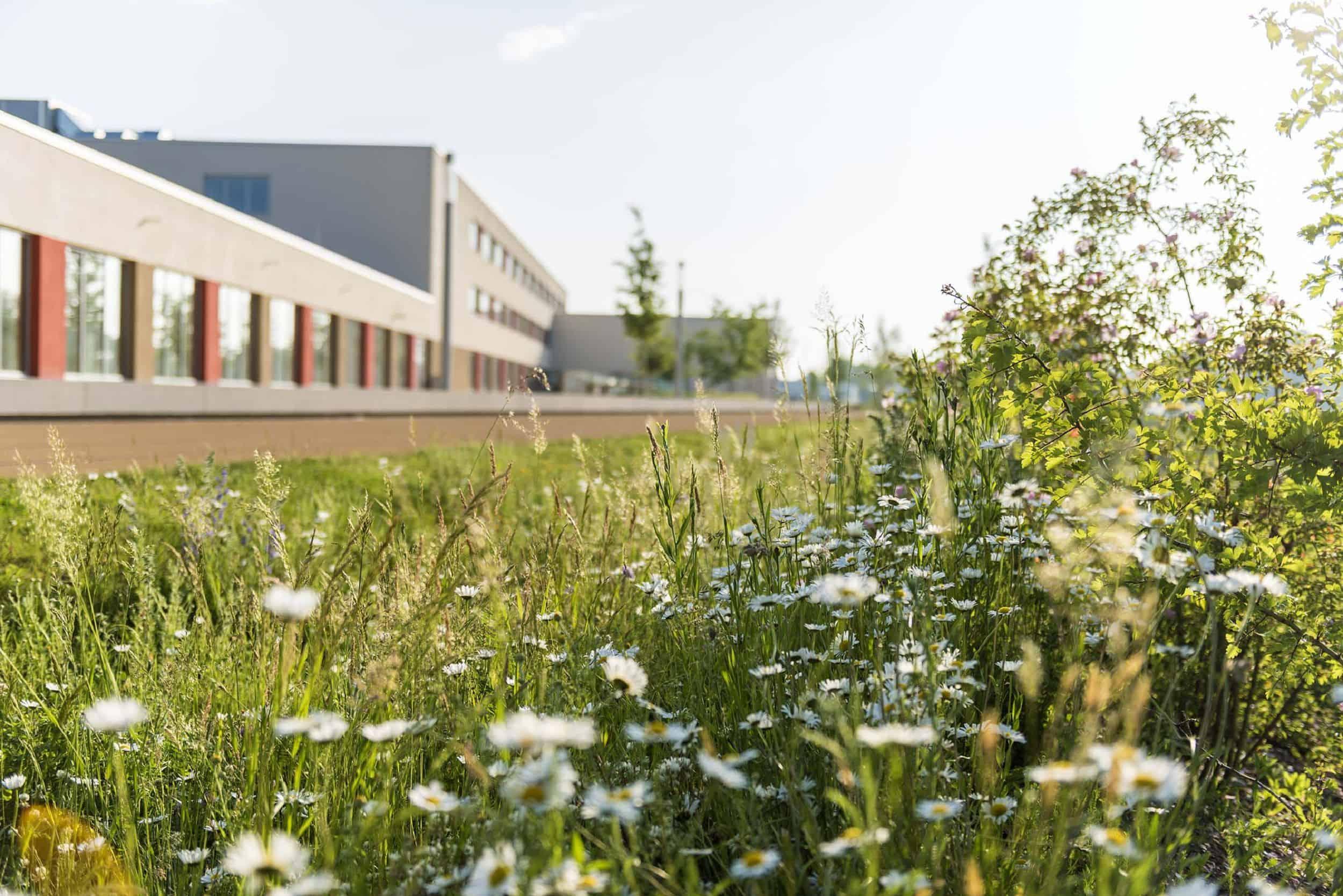 Bild: Das an die Schule angrenzende Biotop, Foto: Johann Hinrichs Photography