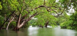 tamarindo mangrove and estuary boat tour