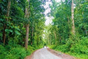 Road leading into the green jungle