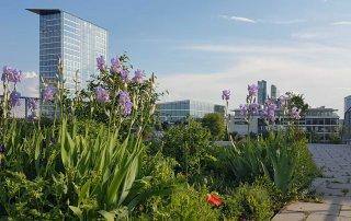 Bild: Funkkaserene Dachgarten, Blick über die Mietergärten mit München-Panorama, (c) ver.de