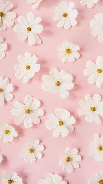 white daisies wallpaper aesthetic, pink flower wallpaper iPhone