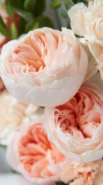 peach peony wallpaper aesthetic, pink flower wallpaper iPhone
