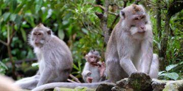 Ubud monkey forest in bali