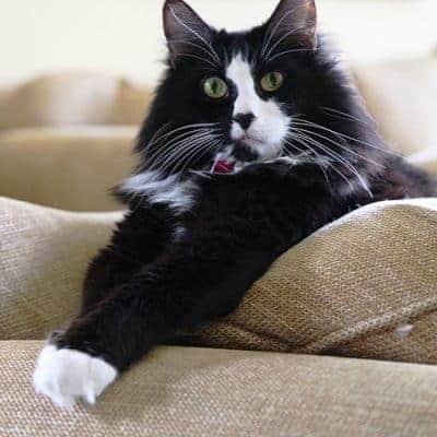 I Heart Faces Photo Challenge – Pets