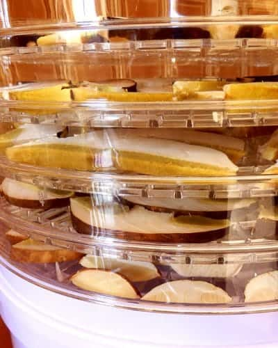 Introduction to Dehydrating food