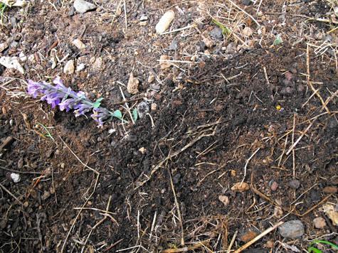How to propagate herbs 2