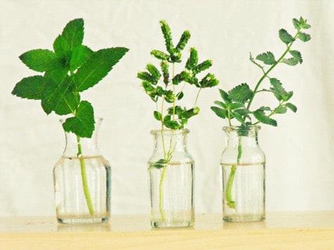 herb cuttings in water
