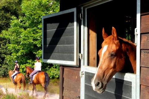 Camping Reeenwissel Hoogersmilde paardenstallen