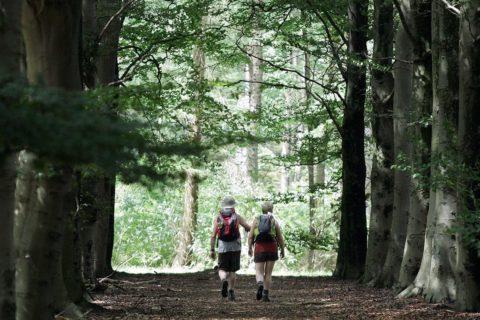 Wandelaars Drents Friese Wold