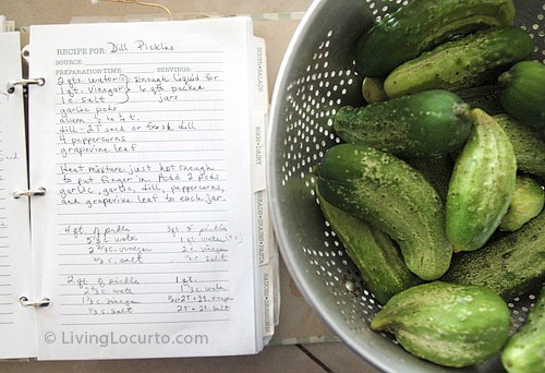 The Best Homemade Refrigerator Dill Pickle Recipe! Easy old fashion family recipe for a crunchy treat. Makes great gifts. LivingLocurto.com
