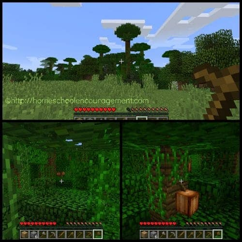 Cocoa Beans in Minecraft
