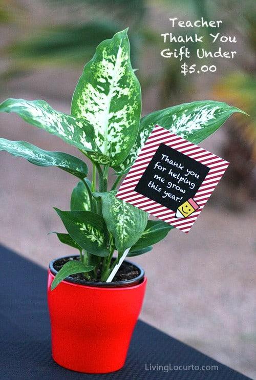 Teacher Gift Idea - Free Printable Tags