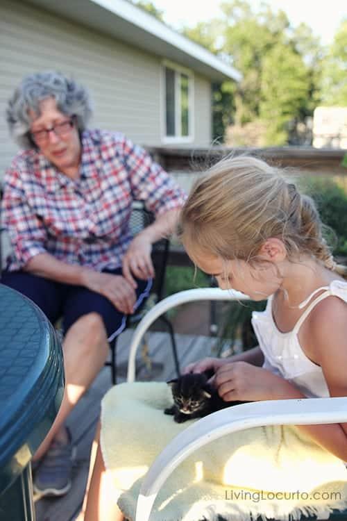 Cute Kitten & Pet Photo Contest. LivingLocurto.com