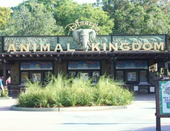 animal kingdom, animal kingdom entrance, disney's animal kingdom