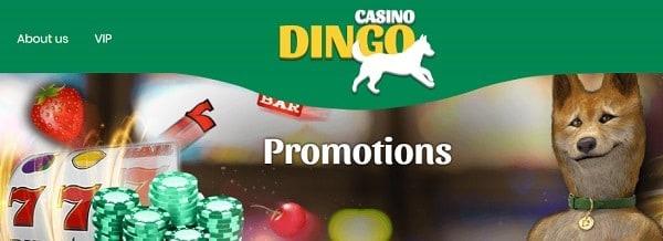 Dingo Casino Free Spins Bonus Codes