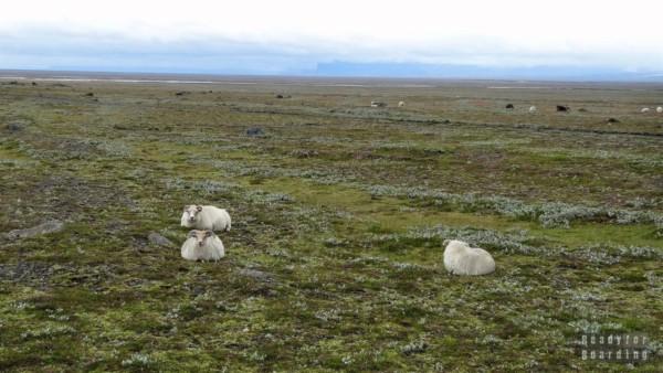 Islandia - Droga z Vik do Hofn