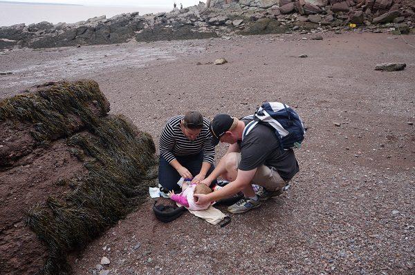 eastern canada road trip, hopewell rocks with baby, hopewell rocks, maritimes with baby