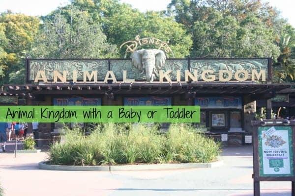 animal kingdom, animal kingdom with a baby, animal kingdom with a toddler, animal kingdom with kids