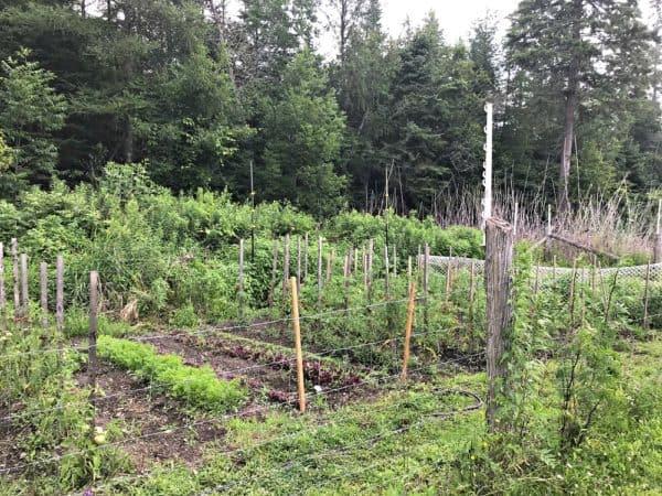 Viamede Resort's Vegetable Garden